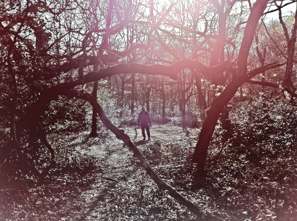 A backlit shot of David in the woods. He was framed by the branches of the trees.