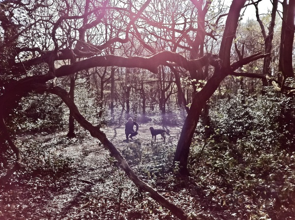 A backlit shot of David and Brusky in the woods. He was framed by the branches of the trees.