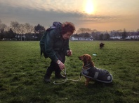 A HDR iPhone photo of a warm sunrise scene in the park. Old lady in the foreground is bending down to feed a small Dachshund that has a small winter coat on. The background is a early sunrise with some clouds.